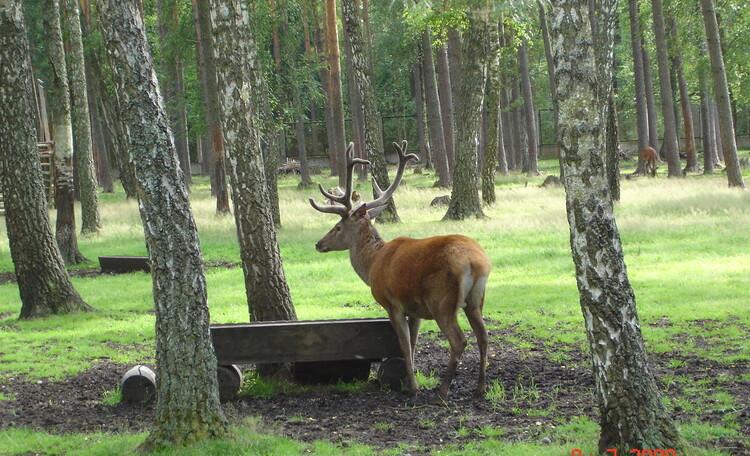 """Усадьба """"Солнечный домик""""  в Беловежской пуще, Окрестности нашей усадьбы. Кормушка в лесу."""
