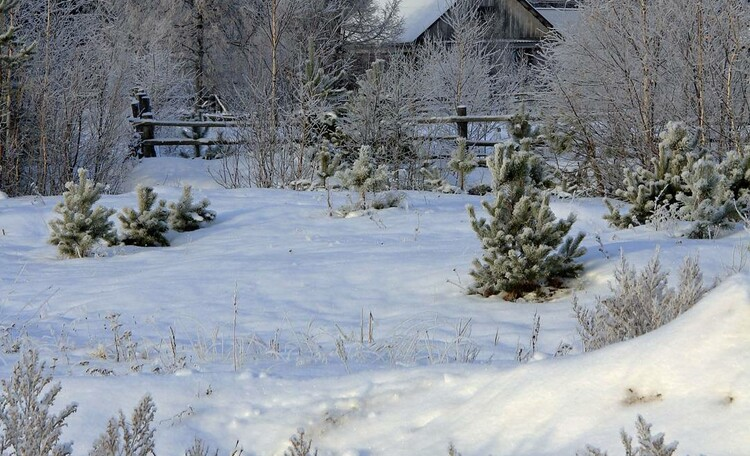 Вид усадьбы зимой