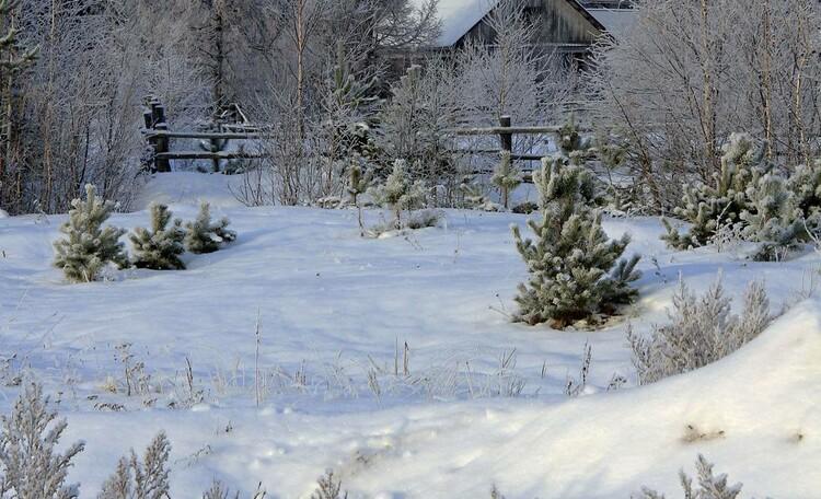 """Усадьба """"Солнечный домик""""  в Беловежской пуще, Вид усадьбы зимой"""