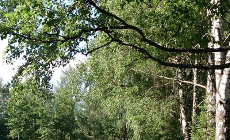 Агроусадьба «Заезд Зубачи»