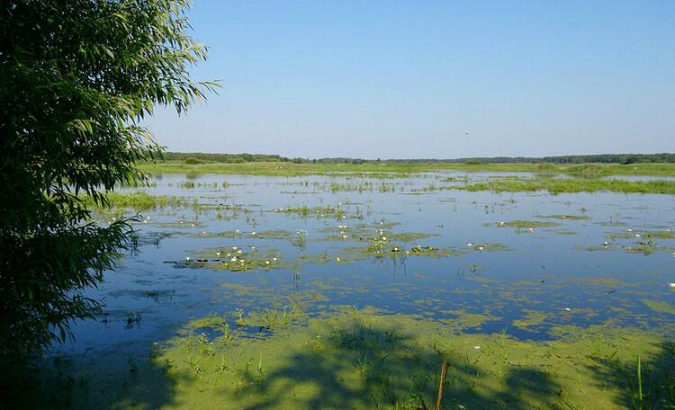 Аграсядзіба «Заезд Зубачи», Пойма реки Ясельда