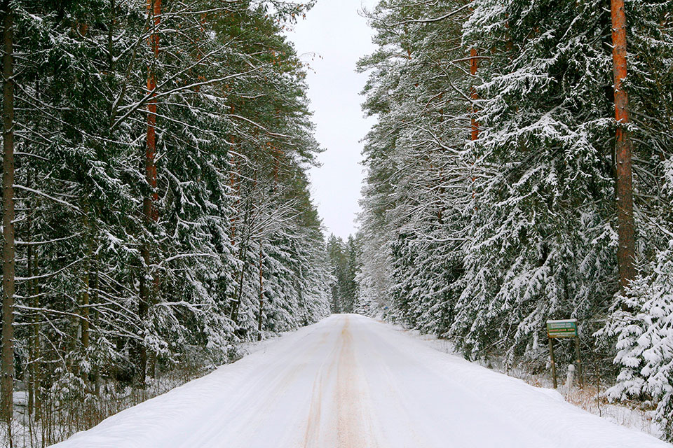 Национальный парк «Беловежская пуща», Царская дорога в Беловежской пуще