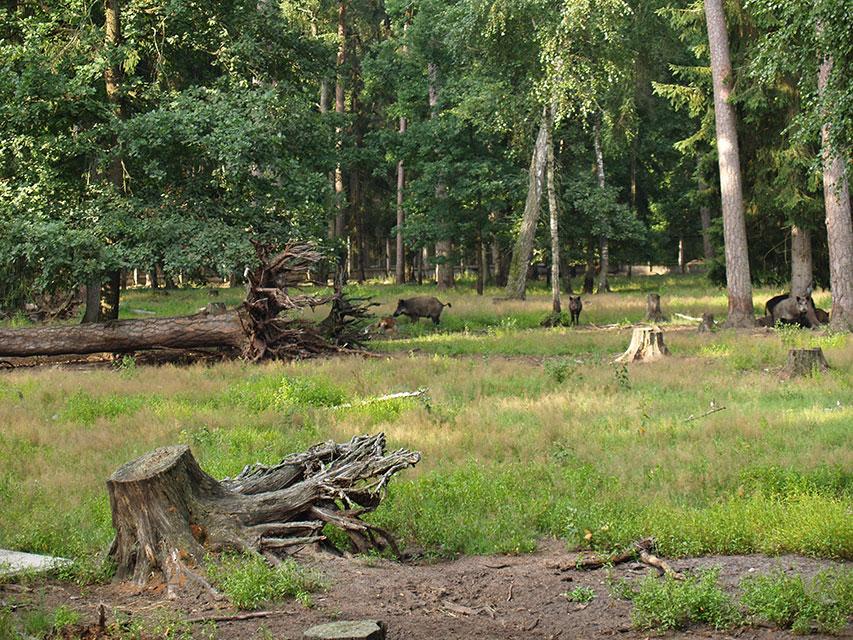 Национальный парк «Беловежская пуща», Национальный парк Беловежская пуща